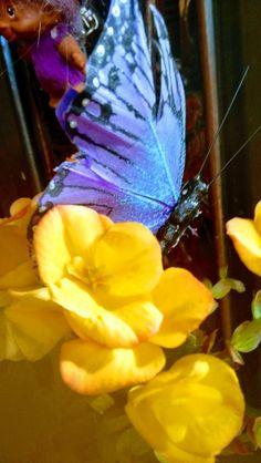 Foto - Google Foto My Life, Google, Plants, Animals, Animales, Animaux, Flora, Plant, Animal