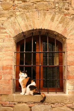 Castle Cat - Umbria Italy -- [REPINNED by All Creatures Gift Shop]