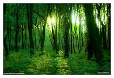 Image result for images of green