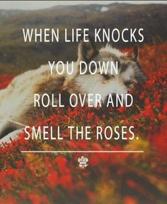 When life knocks you down roll over and smell the roses Baby!