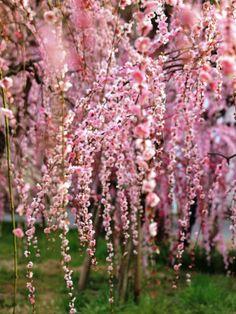 Sakura, Nagoya, Aichi, Japan