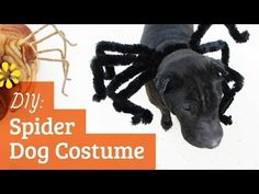 A cute and simple Halloween spider costume to make for your dog :D