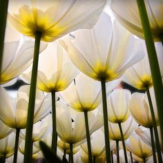Tulips  by ♥siebe ©