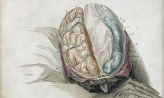 When you split the brain, do you split the person? Corpus Callosum, Psychology Student, Flower Backgrounds, Neuroscience, Brain, Anatomy, Articles, Epilepsy, Grammar