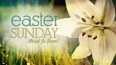 Happy Easter Images Easter Pictures Photos HD Wallpapers images clip art Easter wishes Easter Sunday Images, Happy Easter Photos, Easter Egg Pictures, Happy Easter Sunday, Happy Easter Greetings, Easter Monday, Easter Messages, Easter Wishes, Passover Images