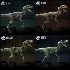 Jurassic World- Meet the Raptor Squad: Raptor Blue- In the late Cretaceous Perio. - Jurassic World- Meet the Raptor Squad: Raptor Blue- In the late Cretaceous Period, the Velociraptor - Blue Jurassic World, Jurassic World Raptors, Jurassic Movies, Jurassic World Fallen Kingdom, Velociraptor Jurassic Park, Jurrassic Park, The Lost World, Falling Kingdoms, Dinosaur Art