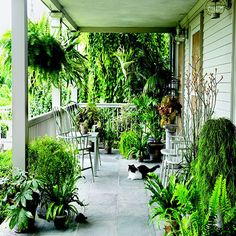 Maybe I'll put plants on the porch in the summer, just like Martha. I have bird's nest fern and Boston fern and Rhipsalis, plus several other good shade plants.