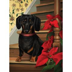 Four adorable designs; The Dachshund Christmas Cards feature four unique and adorable Dachshund designs to. Arte Dachshund, Dachshund Puppies, Dachshund Love, Dachshunds, Daschund, Merry Christmas Dog, Christmas Dachshund, Paint Your Pet, Weenie Dogs