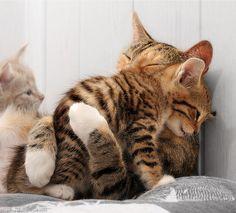 ほっこりする仲良し動物の画像:ハムスター速報
