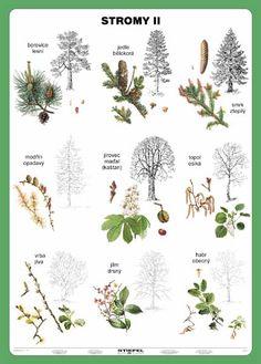 lesní stromy - Hledat Googlem
