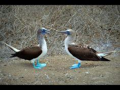Galápagos Islands landscape flora & fauna #galapagos #island #equador #islands #galapagosislands #galapagosisland