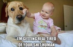 MEME - Real Tired - www.funny-pictures-blog.com