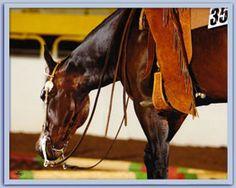 lovely.  #horses