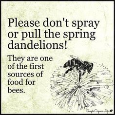we love our dandelions-wish flowers.we love honey bees-- Buzz Bee, I Love Bees, Bee Friendly, Bee Art, Save The Bees, Bee Happy, Bees Knees, Queen Bees, Bee Keeping
