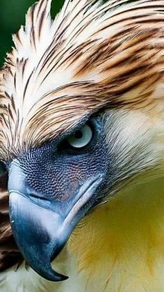 ALL THAT BEAUTY! The Eagles, Pretty Birds, Beautiful Birds, Animals Beautiful, Nature Animals, Animals And Pets, Cute Animals, Wild Animals, Exotic Birds