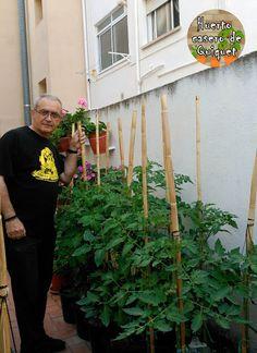 Huerto Casero de Quiquet: Como plantar tomates en cubos, macetas y garrafas