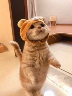 Funny Cute Cats, Cute Baby Cats, Cute Cats And Dogs, Cute Cats And Kittens, Cute Little Animals, Kittens Cutest, Funny Animals, Gatos Cool, Orange Kittens