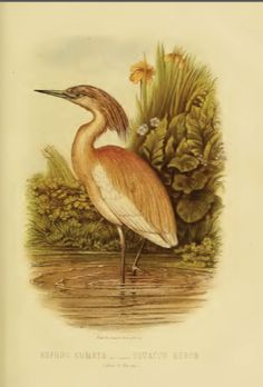 Csontváry Kosztka Tivadar Post Impressionism, Antique Prints, Bird Prints, Heron, Birds, Antiques, Painting, Art, Antiquities