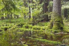 bialowieza nationalpark im Weißrussland Reiseführer http://www.abenteurer.net/3386-weissrussland-reisefuehrer/