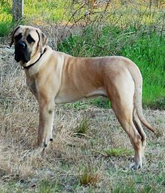 List Of Best Large Breed Dog Foods