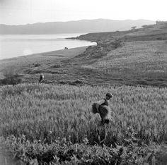 Κάρυστος, 1950-55. Φωτογραφία της Βούλας Παπαιωάννου.  Φωτογραφικό Αρχείο Μουσείου Μπενάκη  Karystos, 1950-55. Photo by Voula Papaioannou. Benaki Museum Photographic Archive