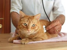 Treatment for Lung Cancer in #Dogs and #Cats - #petlovers #lungcancer