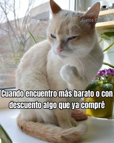 Gatos Cool, Angry Cat, Cats, Instagram Posts, Animals, Kitty, Gatos, Animales, Animaux