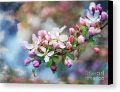 Gift From Heaven Canvas Print by Elizabeth Dow.  All canvas prints are professionally printed, assembled, and shipped within 3 - 4 business days and delivered ready-to-hang on your wall. Choose from multiple print sizes, border colors, and canvas materials.