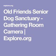 Old Friends Senior Dog Sanctuary - Gathering Room Camera   Explore.org