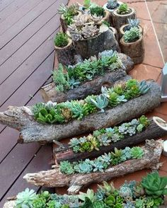 Succulents in wood. You could hang as well.