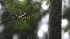 Kuinka hämähäkin verkko syntyy