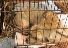 A Montgomery County woman was sentenced Friday after officials found 66 dogs in her house living in filthy conditions earlier this year.