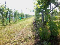 najdi čápa / find a stork - zelené práce 2012 - vinohrad Tasovice / vineyard Tasovice