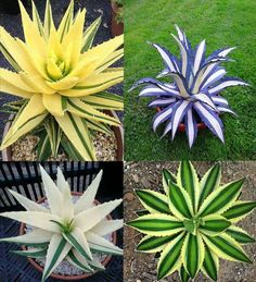 Aloes de colores para conseguir el efecto que quieras
