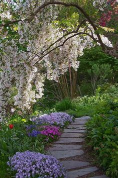 Spring Path under a weeping cherry in Jane's garden, Maine