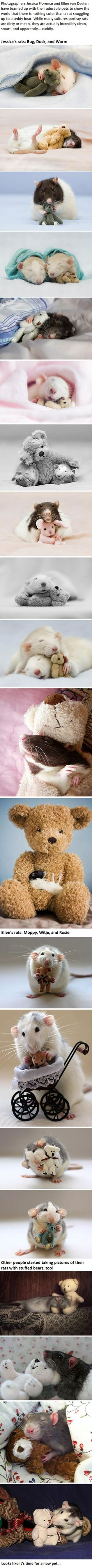 I can't believe I'm saying this, but these rats are adorable! I still don't think I would want one for a pet, though.