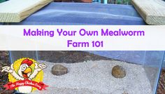 Making Your Own Mealworm Farm 101 Blog Cover