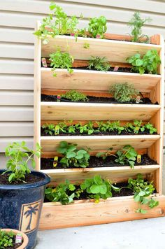 DIY Vertical Garden with Drip Watering System - - Create a DIY vertical garden for the perfect small space garden solution. This cedar vertical garden has a lot of space to grow your favorite herbs and plants. And the built in drip watering system. Vertical Garden Plants, Vertical Garden Design, Herb Garden Design, Diy Herb Garden, Verticle Herb Garden, Wall Herb Gardens, Indoor Vertical Gardens, Vertical Plant Wall, Vertical Planting