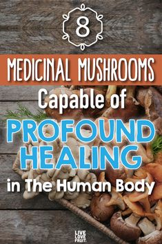These 8 medicinal mushrooms contain major antioxidant concentrations, which help prevent tumours, increase longevity and so much more. Healing Herbs, Medicinal Herbs, Natural Healing, Health Benefits Of Mushrooms, Mushroom Benefits, Mushroom Tea, Maitake Mushroom, Herbal Magic