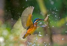 Beautiful colors by Max Rinaldi on 500px