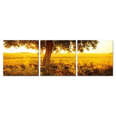 Furinno Senia 'Africa Sunrise' Multicolored Canvas Wall-mounted Triptych Photography Wall Art