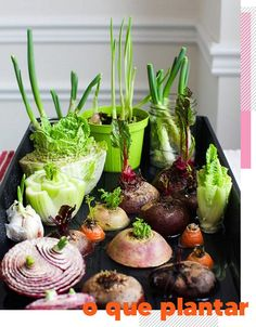 Best vegetables herbs to regrow from kitchen scraps in water or soil Start a windowsill garden indoors or grow foods using grocery lettuce beets etc # Garden Types, Veg Garden, Indoor Garden, Garden Plants, Veggie Gardens, Cactus Plants, Regrow Vegetables, Growing Vegetables, Growing Plants