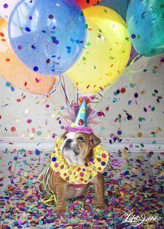 Birthday pup photo idea