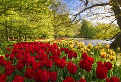 фото, парк, Нидерланды, Весна, цветы, тюльпаны, туристы