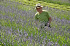 Lavendelfest in Kitzeck Visit Austria, Lavender Fields, Central Europe, Places To Go, Beautiful Places, Seeds, Heart, Pictures, Lavender