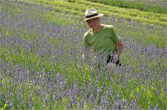 Lavendelfest in Kitzeck