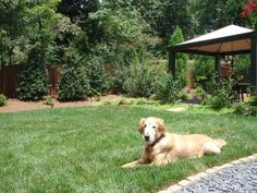 8 Backyard Ideas to Delight Your Dog Garden inspiration