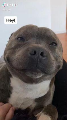 Super Cute Puppies, Baby Animals Super Cute, Cute Wild Animals, Baby Animals Pictures, Cute Baby Dogs, Cute Little Puppies, Cute Funny Dogs, Cute Animal Videos, Cute Little Animals