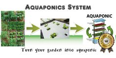 Imagine a Garden Where There's No More Weeds or Soil Pests, No Tilling or Cultivating, No Fertilizer Spreading or Compost Shredding, No Manure Spreading or Irrigating, and No Tractor Shed Required...  This is how: http://goodhomegarden.weebly.com/aquaponics.html