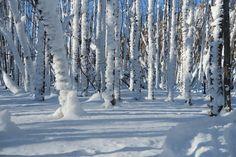 Ośnieżone, Drzewa, Las, Zima, Śnieg